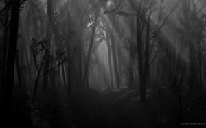 Dark-Forest-1024x640